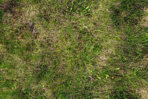 Vers helder jong groen gras ter plaatse. natuurlijk gazon. detailopname. muur. ruimte voor tekst.