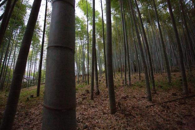 Verscheidenheid aan bomen die samen in het bos groeien