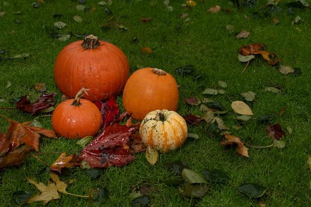 Verscheidenheid aan kleurrijke pompoenen onder herfstbladeren op het gras. helloween concept decoratie.