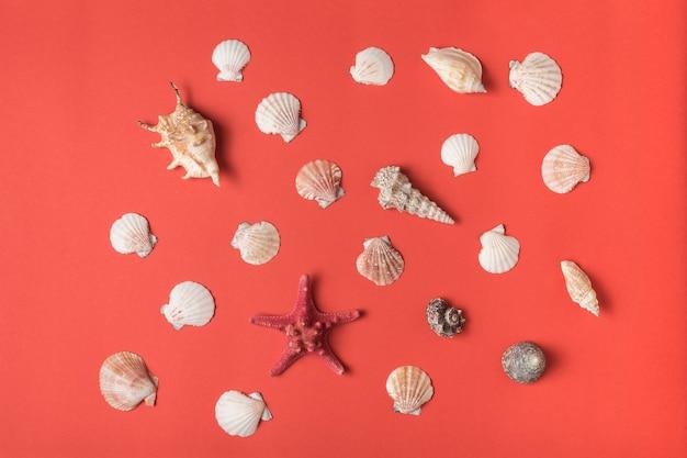 Verscheidenheid aan schelpen op de achtergrond van levend koraal. plat leggen. maritiem concept
