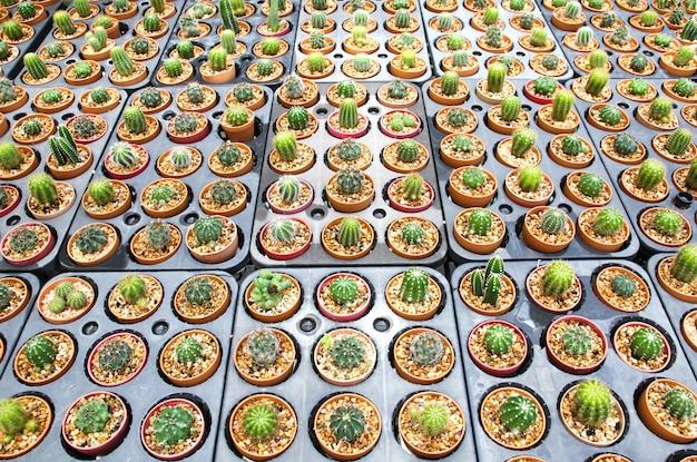 Verscheidenheid van cactuspotplant.