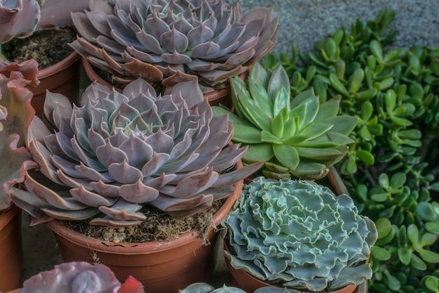 Verscheidenheid van succulenten in potten. crass soorten voor minimale deco.