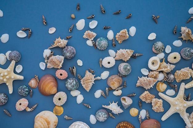 Verscheidenheid van zeeschelpen op blauw oppervlak
