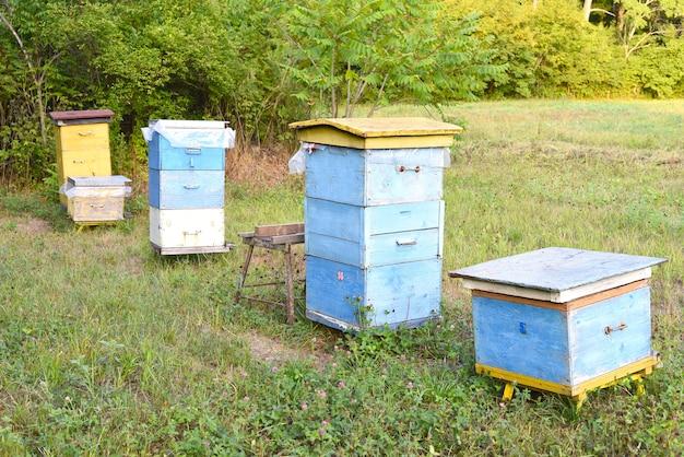Verschillende bijenkorven in een bijenstal