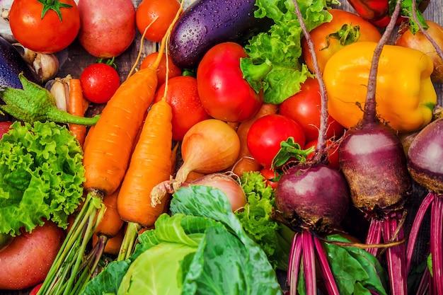 Verschillende biogroenten. selectieve aandacht. voedselaard.
