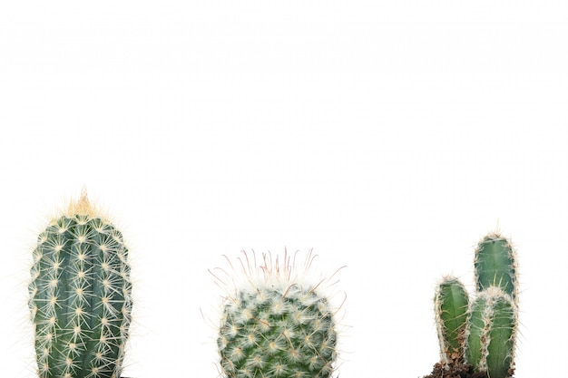 Verschillende cactussen geïsoleerd. home planten
