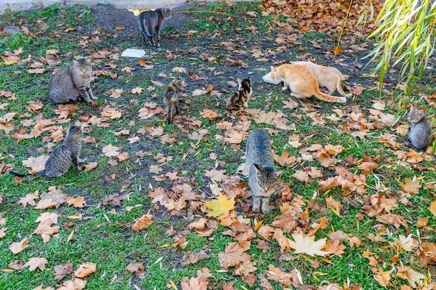 Verschillende dakloze katten in een stadspark in de herfst