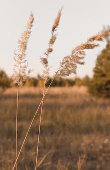 Verschillende gedroogde bloemen van pampagras op een natuurlijke achtergrond van een steppeperceel in een minimale