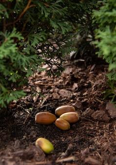 Verschillende gele eikels liggen op de grond onder de groene bomen