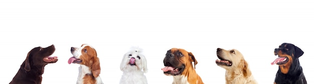 Verschillende honden die camera bekijken