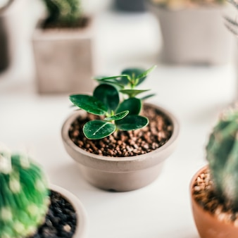 Verschillende kleine cacti
