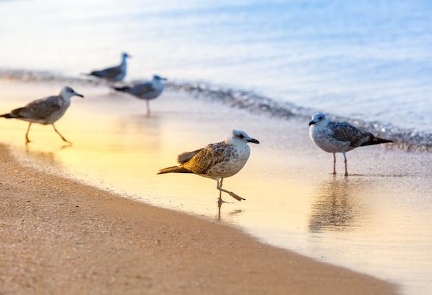 Verschillende meeuwen staan op een zandstrand