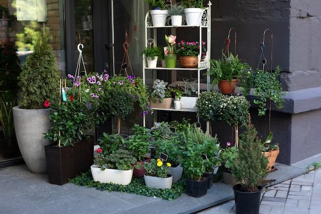 Verschillende potplanten, zaailingen bij de ingang van de bloemenwinkel. gezellige straatdecoratie van bloemenwinkel.