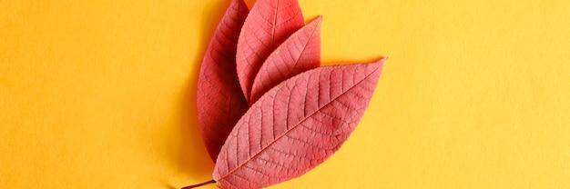 Verschillende rode gevallen kersen herfstbladeren op een geel papier achtergrond plat leggen.