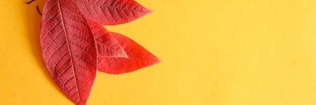 Verschillende rode gevallen kersen herfstbladeren op een geel papier