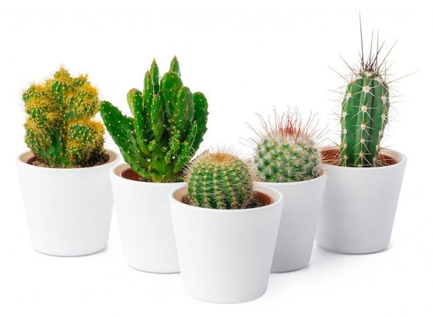 Verschillende soorten cactus die op witte achtergrond worden geïsoleerd