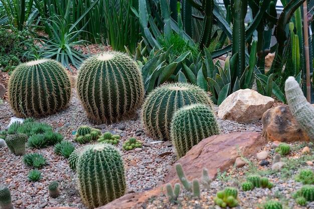 Verschillende soorten cactus in het glazen huis
