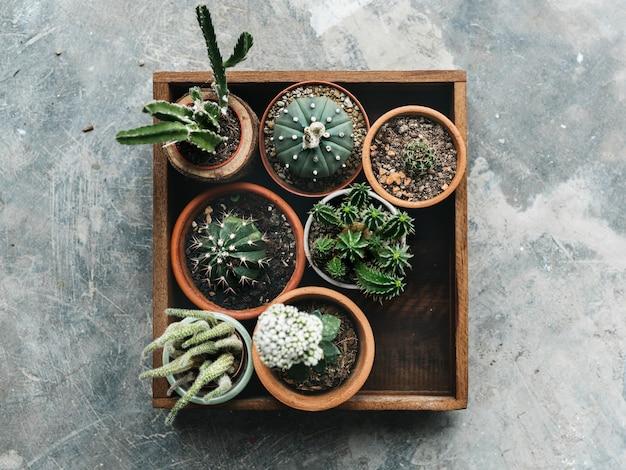 Verschillende soorten cactus