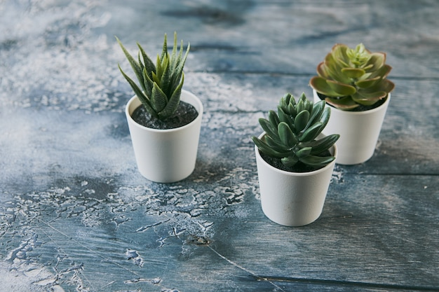 Verschillende soorten echeveria havortia succulente kamerplanten in kleipotten, scandinavische hipster woondecoratie home