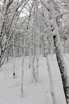 Verschillende soorten kale loofbomen zonder gebladerte in het winterseizoen, kale bomen bedekt met sneeuw na sneeuwval en sneeuwstormen in het winterseizoen