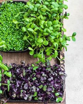 Verschillende soorten microgroenten in containers. zaadontkieming thuis. veganistisch en gezond eetconcept. biologische rauwe microgreens. selectieve aandacht. bovenaanzicht.