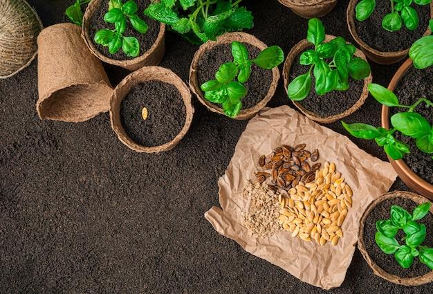Verschillende soorten zaden en zaailingen van basilicum in potten op bruine grond