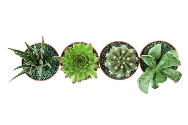 Verschillende vetplanten en cactussen in potten op wit oppervlak