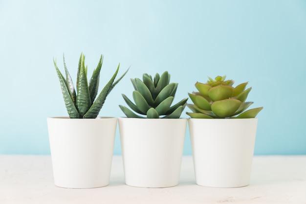 Verschillende vetplanten in kleine witte potten op tafel. woondecoratie, scandinavische stijl design