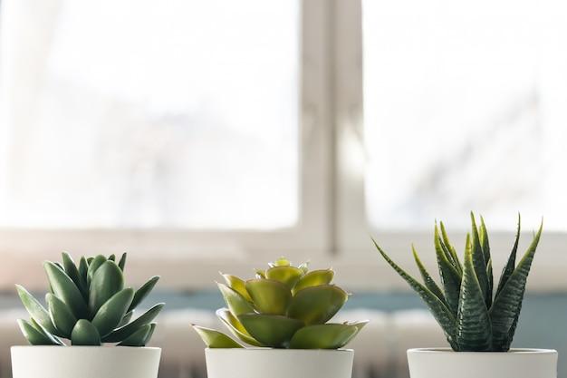 Verschillende vetplanten in kleine witte potten tegen het raam. woondecoratie, scandinavische stijl design