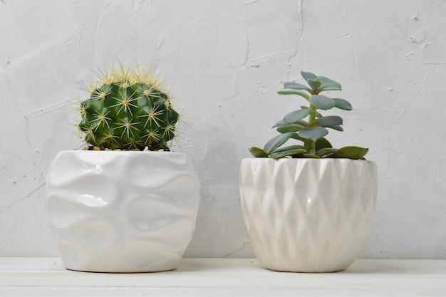 Verschillende vetplanten in verschillende potten. kamerplanten thuis op een witte plank.