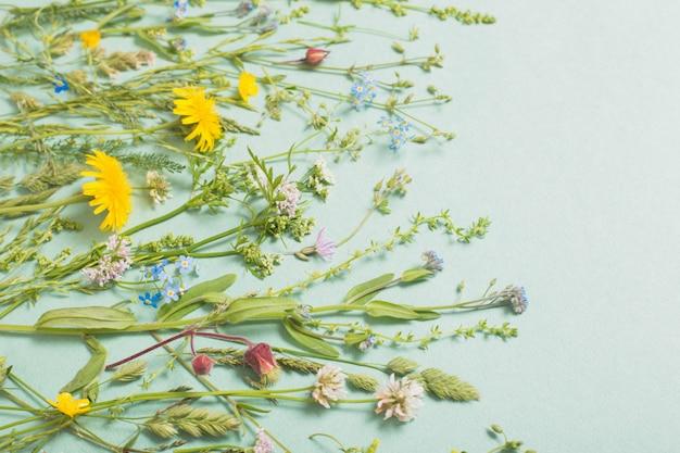 Verschillende wilde bloemen op papieroppervlak