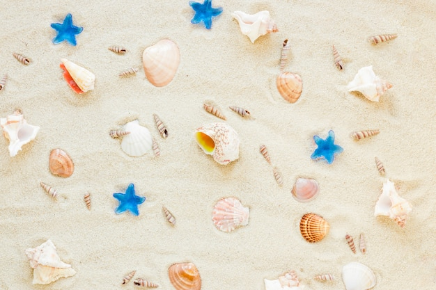 Verschillende zeeshells verspreidden zich op zand