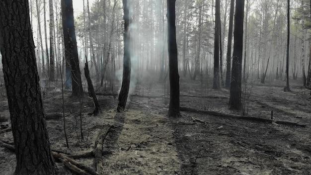 Verschroeide aarde en boomstammen na een lentebrand in het bos. zwart verbrand veld met verse spruiten van nieuw gras. dode aanplant met bomen. buitengewoon incident. gevolgen van een bosbrand