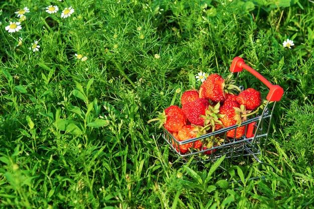Verse aardbeien in een kar op de achtergrond van de natuur