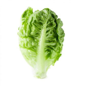 Verse baby cos lettuce isolated over the white background.