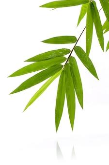 Verse bamboebladeren met waterdaling die op witte achtergrond wordt geïsoleerd.