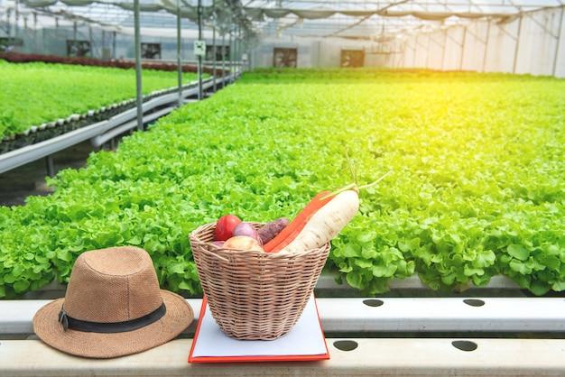 Verse biogroente in houten mand met hoed van eigenaar in serre organisch landbouwbedrijf met het groene landbouwbedrijf van het lezingskinderdagverblijf op achtergrond.