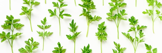 Verse biologische peterselie bladeren gerangschikt in een rij op een witte achtergrond. banner