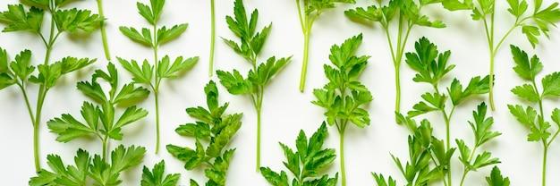 Verse biologische peterseliebladeren gerangschikt in een rij op een wit oppervlak