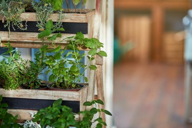 Verse biologische pittige kruiden groeien op planken