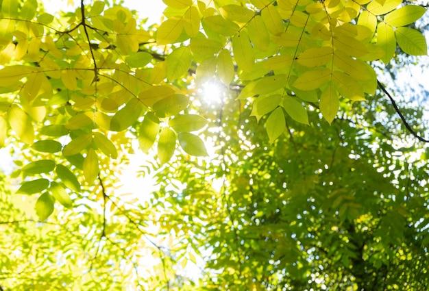 Verse bladeren in het bos waar de zon doorheen schijnt met lichtstralen