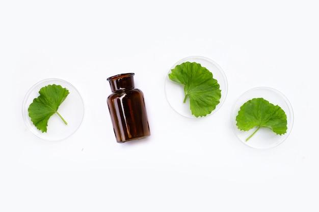 Verse bladeren van gotuola in petrischalen op met geneeskundefles witte achtergrond.