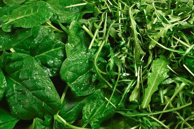 Verse bladeren van rucola en spinazie