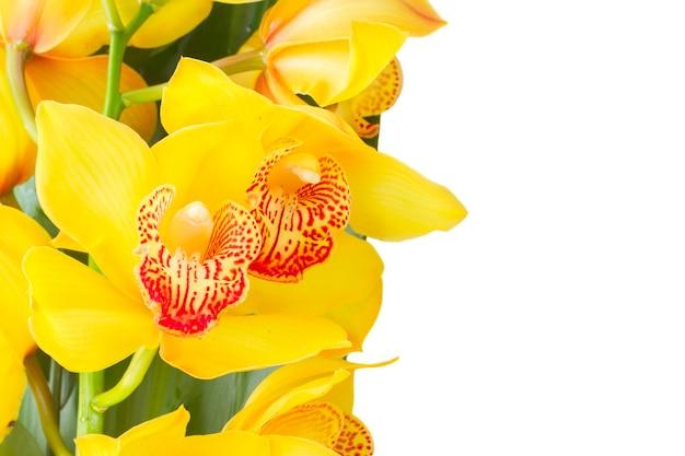 Verse bloeiende gele orchidee bloemen en groene bladeren grens geïsoleerd op een witte achtergrond