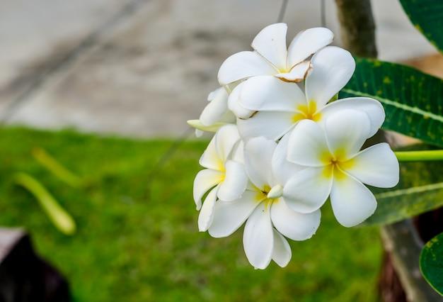 Verse bloemen op de spa-tuin