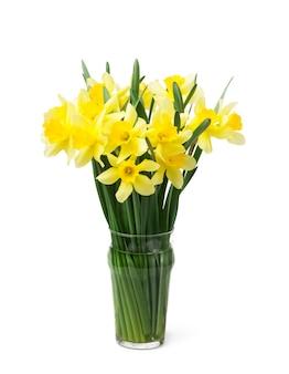 Verse bloemen van narcissen in een vaas op wit wordt geïsoleerd