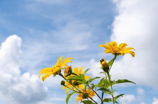 Verse boom goudsbloem