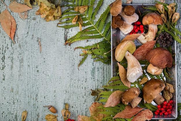 Verse bospaddestoelboleet op het oppervlak van de herfstbladeren