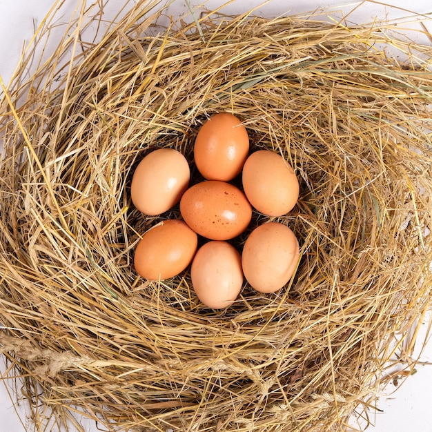 Verse bruine kippeneieren in hooi, eieren in het nestbovenaanzicht.