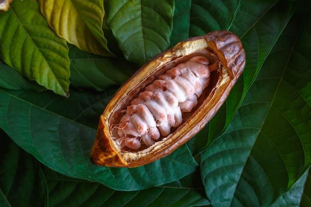Verse cacaopeulen en verse cacaobonen op de achtergrond van het cacaoblad.